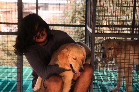 P4PAI DOG TRAINING AND BEHAVIOURIST ALAPPUZHA