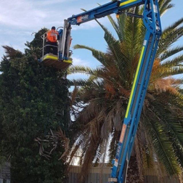 Shayne's Tree Services